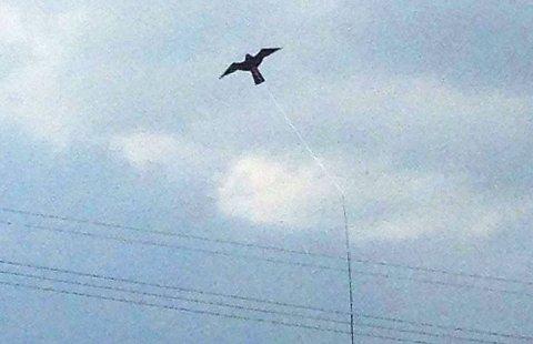FUGLESKREMSEL: Mannen ringte brannvesenet da han trodde en fugl hadde satt seg fast.
