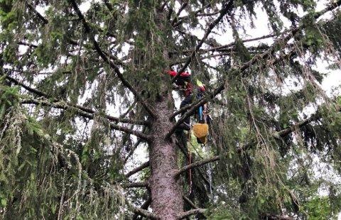 REDNINGSAKSJON: Stig Jensen og Jan Larsen måtte gjennomføre en redningsaksjon for å berge katten Sølvi onsdag morgen.