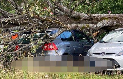 MYE VIND: Det har vært sterk vind på Østlandet denne onsdagen, og flere biler har blitt rammet av fallende trær.