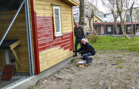Maling av det nye påfugl- og hønsehuset i Vanndamman.