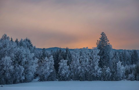 @ragnebl har delt dette vinterbildet med #amtaland på Instagram. Del gjerne dine bilder du også.