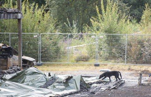 Onsdag ble det gjennomført nye søk med hund på branntomten i Hardangervegen. Dette bildet er fra et søk utenfor blokken tidligere denne måneden.