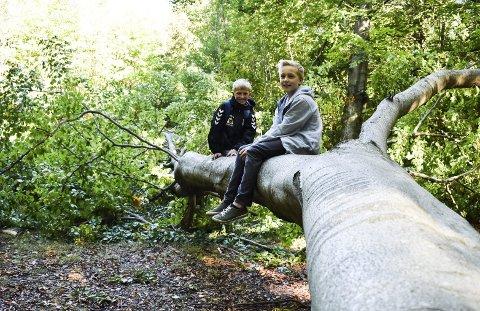 KLATRE: Brikt David Myhre og Fredrik L. Staff lot ikke anledningen til litt klatring i treet gå fra seg.