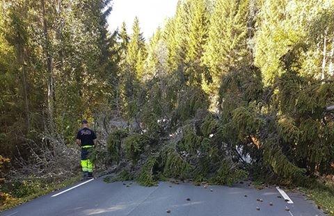 OVER VEGEN: Dette treet har falt over vegen i Bjoneroa, Ådalsvegen ved Gammelesetra