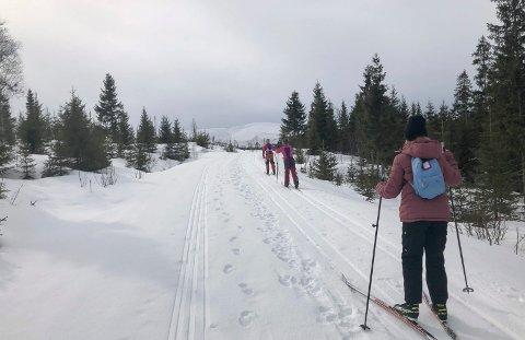 TA EN POST: Ta en post i Fjelltrimmen i Vefsn. Dette er Damhaugen som du kan nå på ski fra Litjenget og Mosåsen.