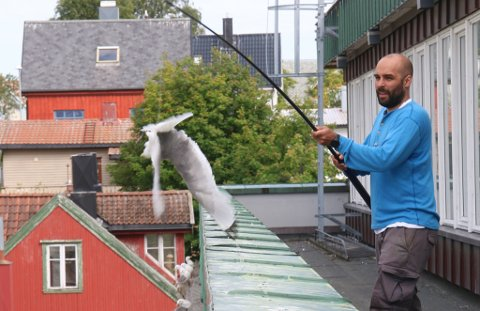 Sigurd Benjaminsen fanger en krykkje på taket av Nav-bygget i Tromsø. Det vekker reaksjoner.