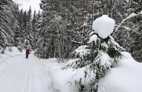 KALDT: Skiforeningen lover fortsatt flotte skiforhold i marka. Ifølge meteorologene kan det bli lenge til du  kan forvente å se løvetann i veikanten. FOTO: Bjørn V. Sandness