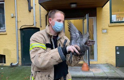 BRANNMANN OG DUE: Christian Khelet og kullsvart due.