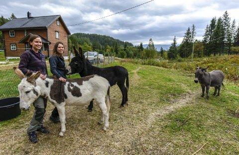Ekteparet Anne-Lise og Camilla Drege Arntsen har funnet sitt paradis i Straumbygda ved foten til Bustneslia. Familien består av tre esler og to hunder.