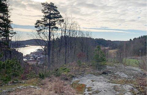 SKOLETOMT: Her, like ved klubbhuset til Sandar, vil ordfører Bjørn Ole Gleditsch ha en ny skole.