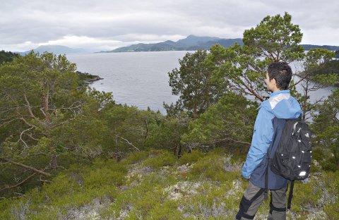 YTRE: Ytre deler av Straumsnes er møtepunktet med himmel og hav, fjord, fjell og et kystlandskap med furu og lyng.FOTO: YNGVE LIE