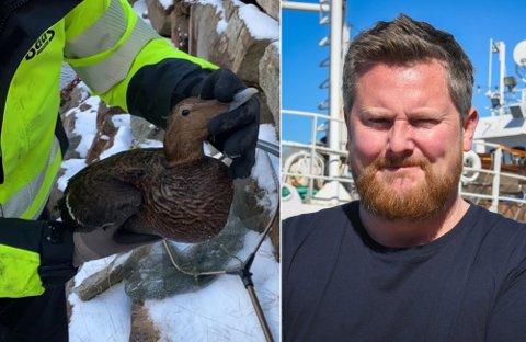 Fuglen ble til slutt reddet, etter tre-fire dager i vannet, av Johan Arnesen (t.h.) og broren hans, Tor Magne Arnesen.