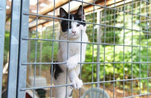 Kattepesten er tilbake i nordfylket, og Dyrebeskyttelsen er bekymret.