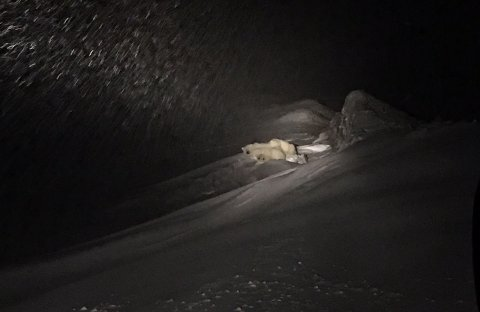 Isbjørnsbinna og de to ungene ligger i ro rett utenfor Longyearbyen, mandag.
