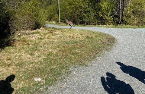 SKREK: Kenguruen dukket plutselig opp ved elevflokken som var på tur i skogen.