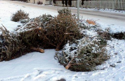 UT MED JULA: Tønsberg kommune har over 40 steder du fritt kan kvitte deg med juletreet ditt.