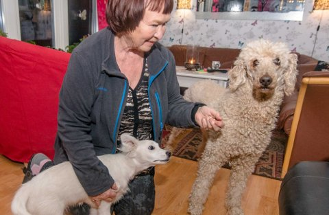 Ingunn Karlsen sammen med valpen Tommy og kongepuddelen Lillian.