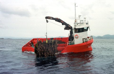 Fiskeridirektoratet vil fjerne forbodet mot tarehausting i ni område som ikkje har vernestatus, men som i dag er stengde.