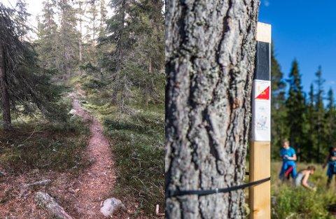 Denne stien like sør for Balbergkampen har blitt tråkket opp av stolpejegere.