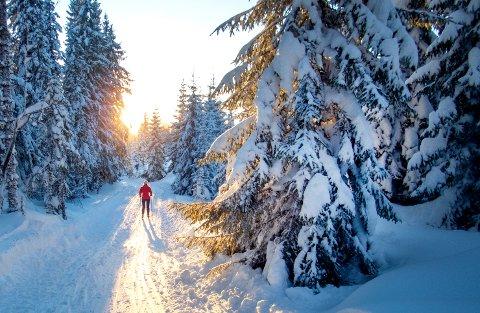 Selv om februar startet svært kaldt, endte det opp med å bli satt flere varmerekorder i Norge. Kaldest var det i Folldal, varmest ble det i Grimstad.