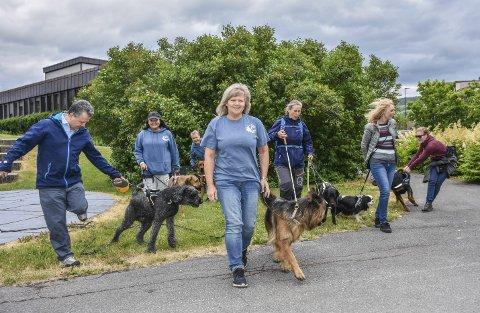 Hundekaos: Det blir lett litt kaostilstander når hundene kommer sammen men blir holdt i bånd. – De trenger å løpe fritt, er beskjeden fra hundeeierne.