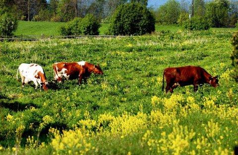 REDUKSJON: – Kjøttproduksjonen bør reduseres ved å kutte ut import av kraftfôr, ikke ved å legge ned eng- og beiteareal i Norge.