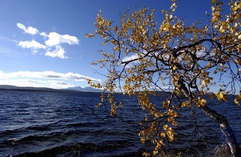 NY ORDNING: Fra skoleåret 2020/2021 blir det felles høstferie i hele Innlandet. Her et høstmotiv fra Femundsmarka. (Foto: Kjell Arne Fridtun)