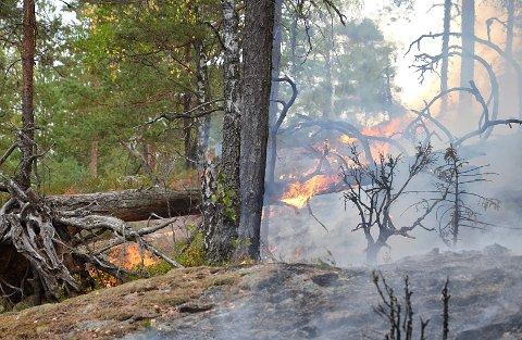 SKOGBRANN: Tørken gir ekstrem fare for spredning.