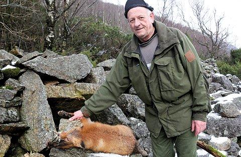 Trygve Espedal har fanga og skote mange revar etter at han skaut sin første rev som 15-åring. Her har han reven framfor ei av steinfellene sine.