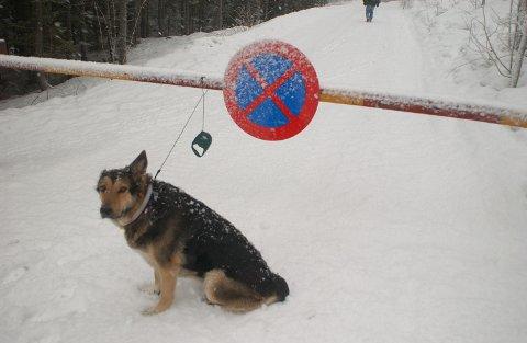 Ekstraordinær båndtvang på grunn av mye snø og rådyr i skogen.