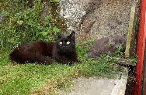 SKEPTISK: Leder Jonas Wahlström ved Skansen-Akvartiet er en dyreelsker. Han mener at katteeiere bør holde sine kjæledyr inne om sommeren. Arkivrfoto: Kurt André Høyessen