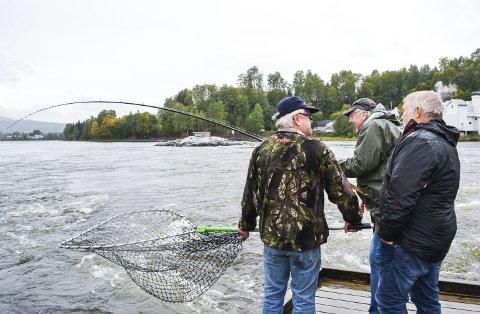 FATS FISK:  Bjørn Ivar Holen (f.v.), Edvard Kristiansen og Morten Caspersen hadde fiskelykke i elva.