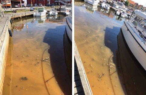 MISFARGET: Flere fryktet at det misfargede vannet i indre havn på Skjærhalden skyldtes et kloakkutslipp, men det stemmer ikke, ifølge drifsoperatør vann og avløp i Hvaler kommune.