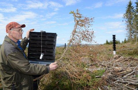 HASTER: – Nå haster det med å få ut billefeller og få ut skadete trær, sier skogeier Oddvar Glorvigen, her på veg ut i skogen med barkbillefeller.
