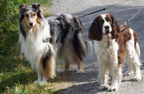 FANT KJÆRLIGHETA: Luna (til venstre) og Sprint går gjerne tur sammen.