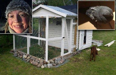 EN NY SJANSE I LIVET: May-Bente Røstgaard reddet en sliten dueunge, som nå samler styrke i et lokalt dueslag.
