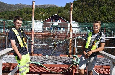 Travle dagar: Bjørn Olav Kjærland (t.v.) og Daniel Lutro Onarheim jobbar fulltid på Eide Fjordbruk i sommar. Sommaren er den travlaste tida på oppdrettet, så det kan bli lange dagar på dei.