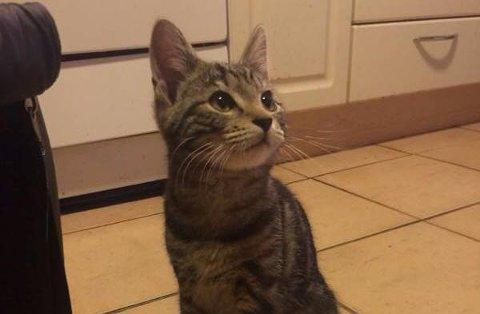 SOSIAL: Katten er sosial og tilsynelatende i god form.