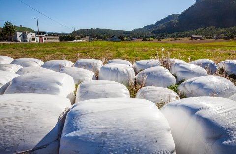 FORURENSER: Plast fra slike rundballer er hovedårsaken til plastforurensingen i norske lakseelver, viser en ny undersøkelse.