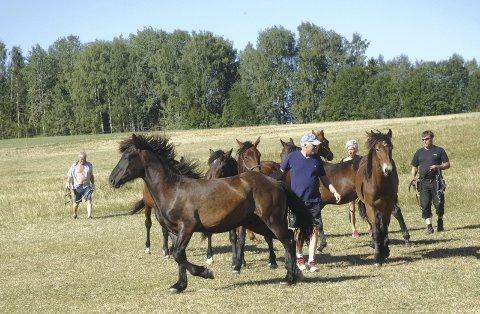 Hestehold: På garden Frisli har det i mange år vært hestehold.