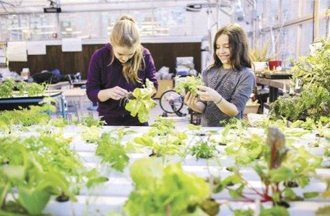 VEKSTHUS: Nye Sydskogen skole skal ha veksthus på taket – et veksthus som kommer til å bli et spennende rom for elevene med blant annet såpebobler som isolasjon i veggene.