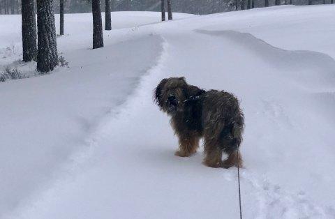 BÅND: Fortsatt ingen båndtvang på vinterhalvøya, men et stort ansvar hviler på hundeeier.