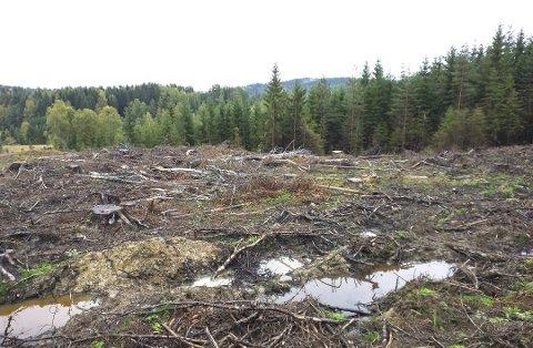 PLANTING: Arbeideren drev med planting av ny skog da lynet slo ned. Ifølge Skog- og utmarksforvalter i Stangeskovene Sten Ivar Tønsberg ble mannen reddet av kollegaene.