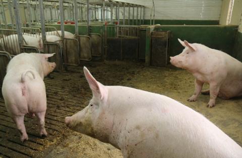 En stor reduksjon av kjøttproduksjonen vil brakklegge store deler av landet, mener Sola Høyre.