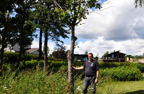 SKADET: Denne lønna får ikke stå i fred. Oddbjørn Myhren i Teknisk drift i Tønsberg kommune er lei av at noen beskjærer og ødelegger treet.