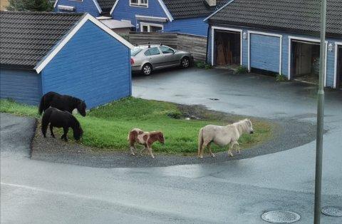 Ponniene ble observert flere steder på morgenkvisten lørdag, blant annet i Blåby'n i Steinkjer.