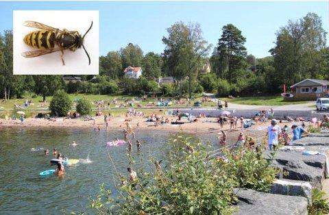 SKILTER TIRSDAG: Etter meldinger om jordvepsebol på Krokstrand, tar kommunen affære.