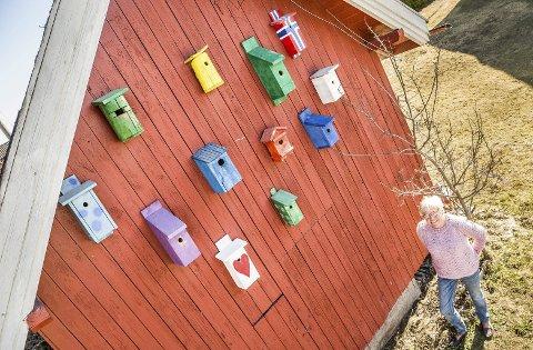 MANGFOLD: Uthusveggen til Anne Marie Tollefsbøl på Skotterud tiltrekker seg oppmerksomhet. Den er full av barnebarnas fuglekasser.