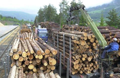 Meir av dette: Talet på eigedomar med tømmer for sal er nesten halvert, men dei små står for mykje av auken i hogsten.