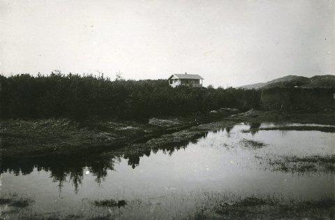Haraldsvang: Haraldsvang med unge trær og «Brushytta» på høyden. Bildet er sannsynligvis tatt rett etter at hytta ble bygget, i 1897.  ALLE FOTO: KARMSUND FOLKEMUSEUM